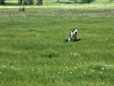 Motion pour le maintien de MAEC favorables à la biodiversité